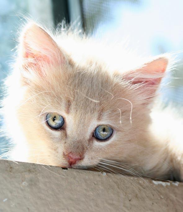 Four Orange Fosters: Guinness [4]  kitten