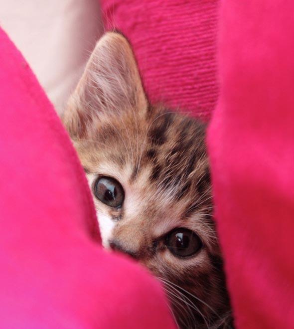 Boo [5]  kitten