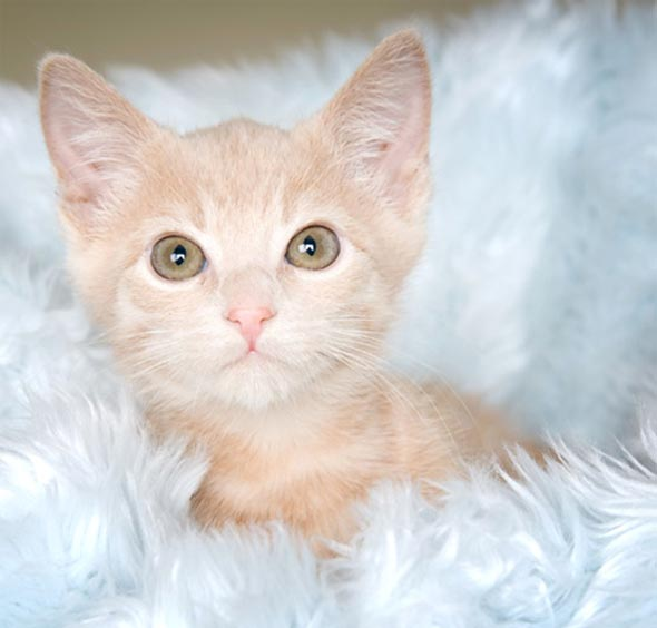 Four More From Michelle: Winnie the Pooh  kitten