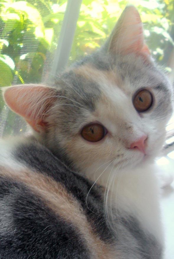 Ruby [4] kitten