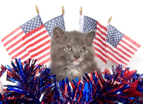 Patriotic Kitten [4] kitten