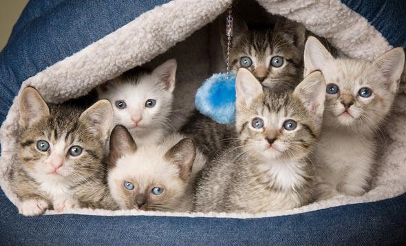 Otto's Foster Mates [5]  kitten