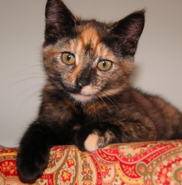 Margaret [5] kitten