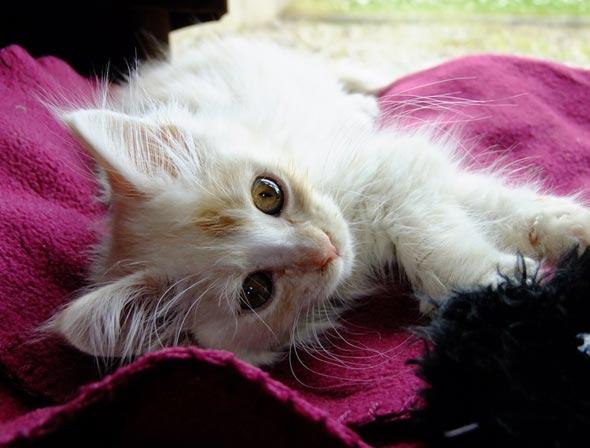 Hugo Reyes [5]  kitten