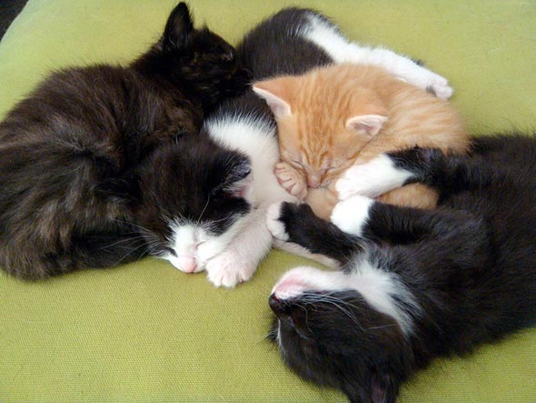 Smoggy's Friends: Robert, Colin, Flicker & Pearl  kitten