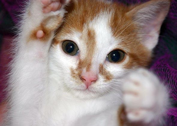 Bob [5] kitten