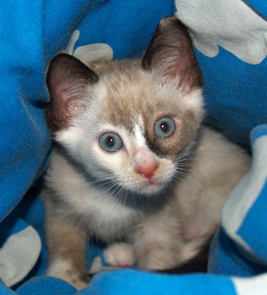 Shenanigans [5] kitten