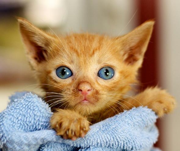 DCFoF: Chase [4] kitten