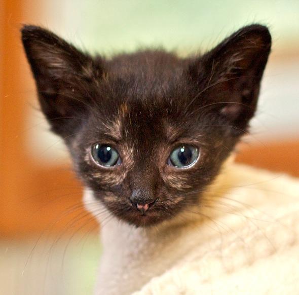 DCFoF: Ruby [4] kitten