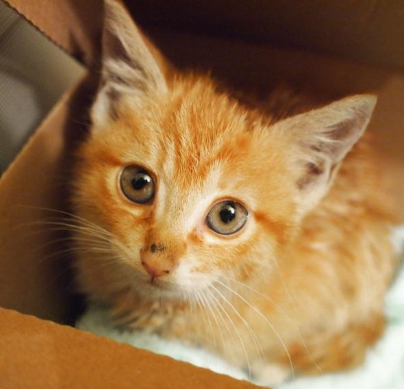 Dora [4] kitten