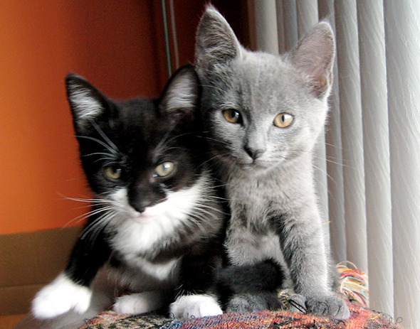 Ivy and Grace [4]  kitten