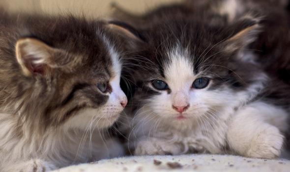 DCFoF: Rock County Kittens [5]  kitten