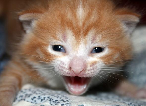 Kay's Kittens [4] kitten