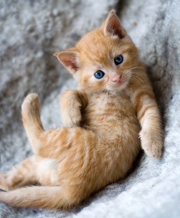 Máni's Kittens [5]  kitten