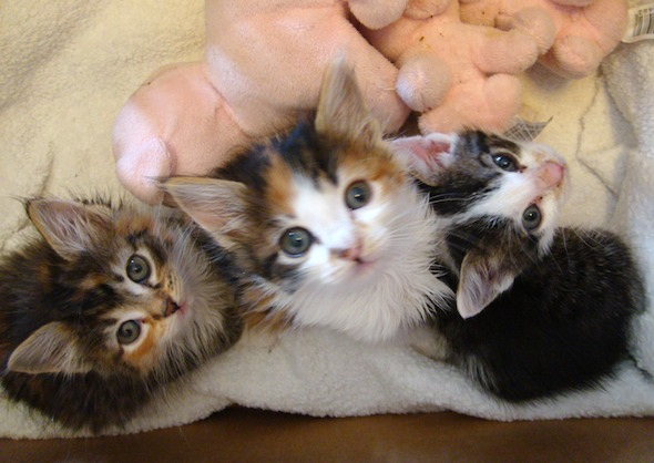Smoggy's Friends: Cookie, Willow & Digby  kitten