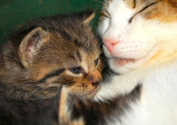 Pennsylvania Farm Kittens [5]  kitten