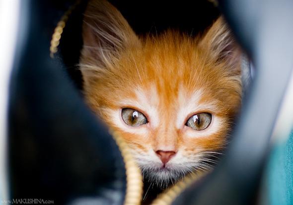 Encore: Bree  kitten