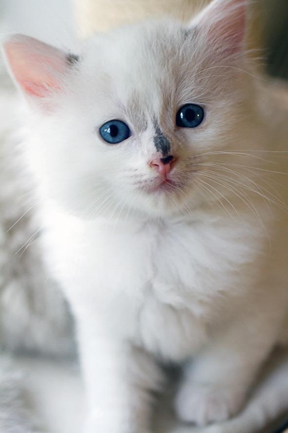 Lylie's Latest Litter Part 7: Lylie  kitten