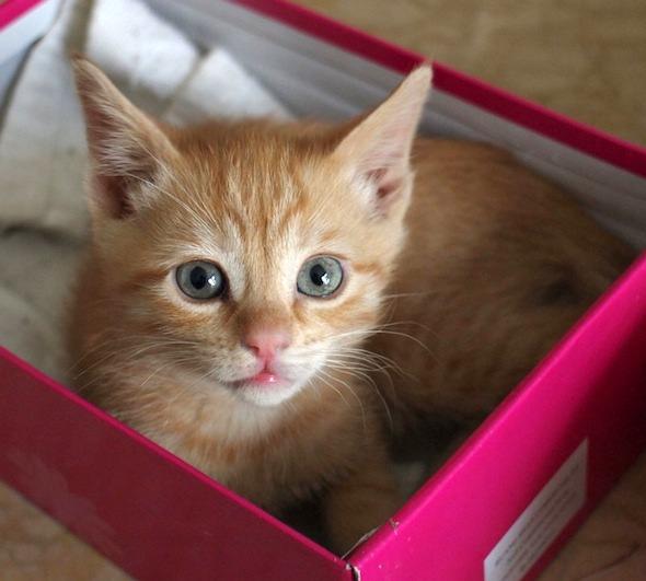 Maggie  kitten