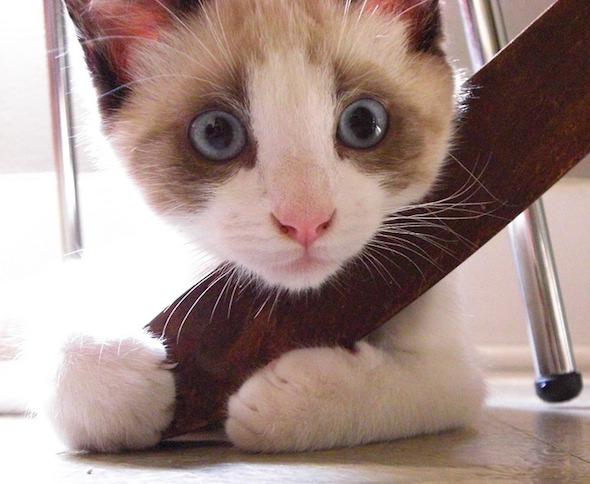 Bill [4] kitten