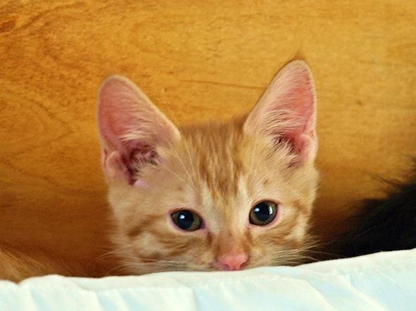 GQ  kitten