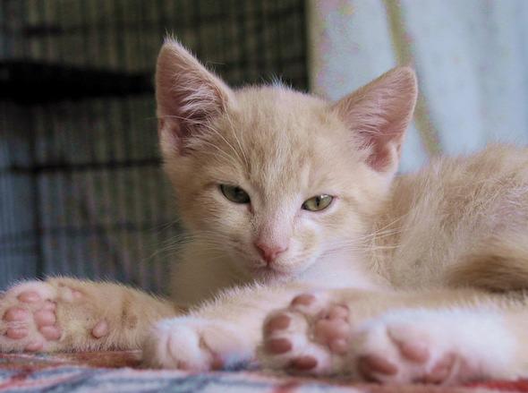 New Year's Eve Kittens: Duffy [4] kitten