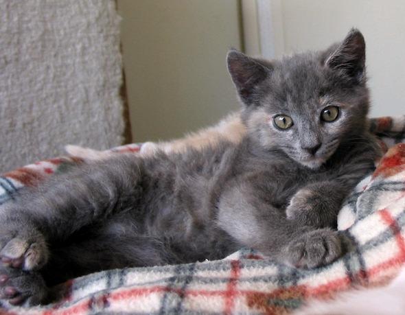 New Year's Eve Kittens: Muffy [4] kitten