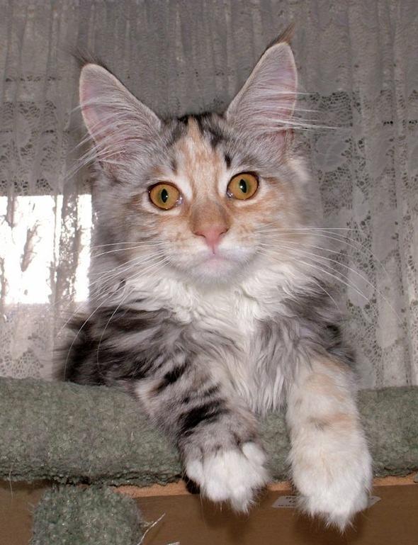 Jemma [4] kitten