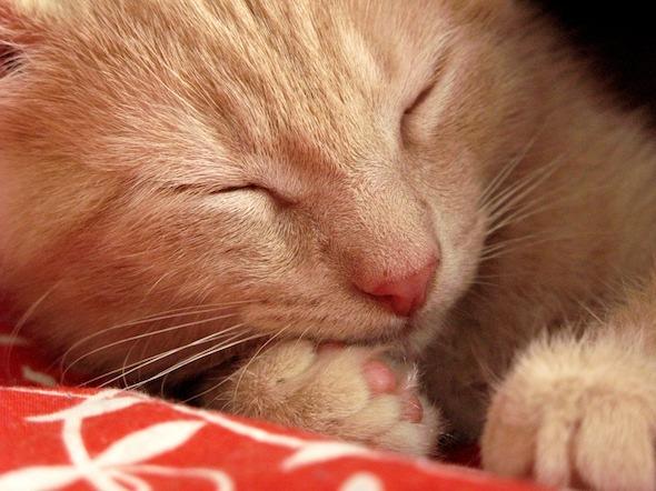 Duncan McGee [5] kitten