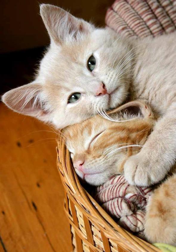Bibbie and BowBow [5] kitten