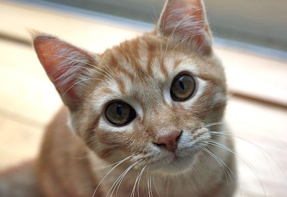 Tango [4]  kitten