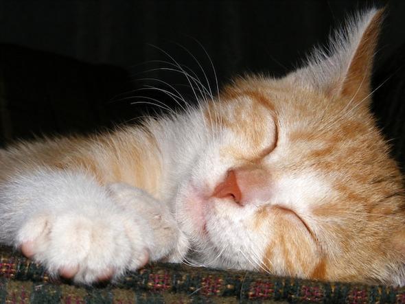 Pumpkin [4]  kitten