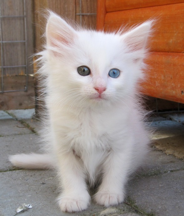 Gucci  kitten