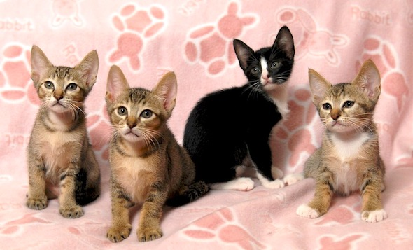 The Soda Family: All Together  kitten