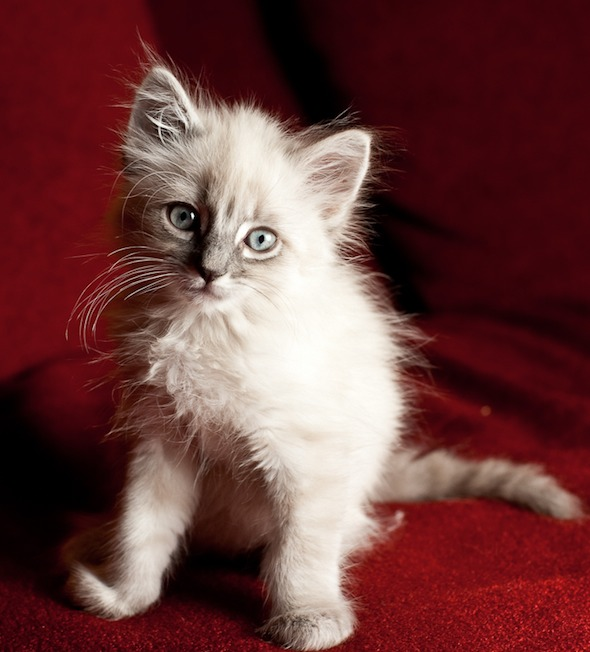 Bunny  kitten