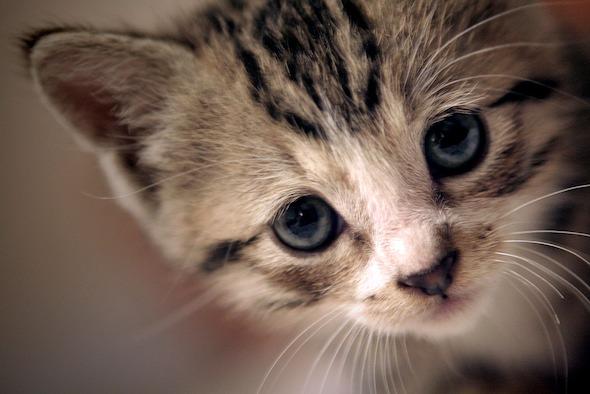 Mo [4] kitten