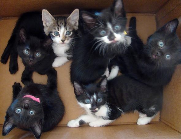 Smoggy's Friends: Rupert, Parker, Belamy, Penny, Olive & Thomas  kitten