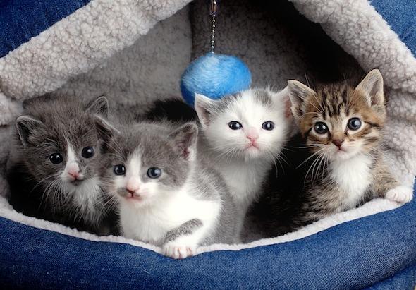 Monti, Tucker, JT & Jack [4] kitten