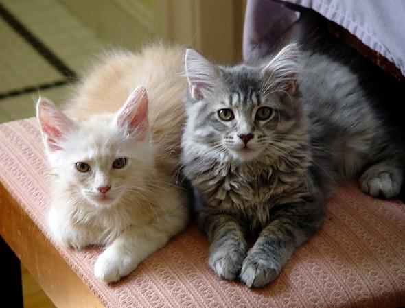 Daisuke and Momiji [4] kitten