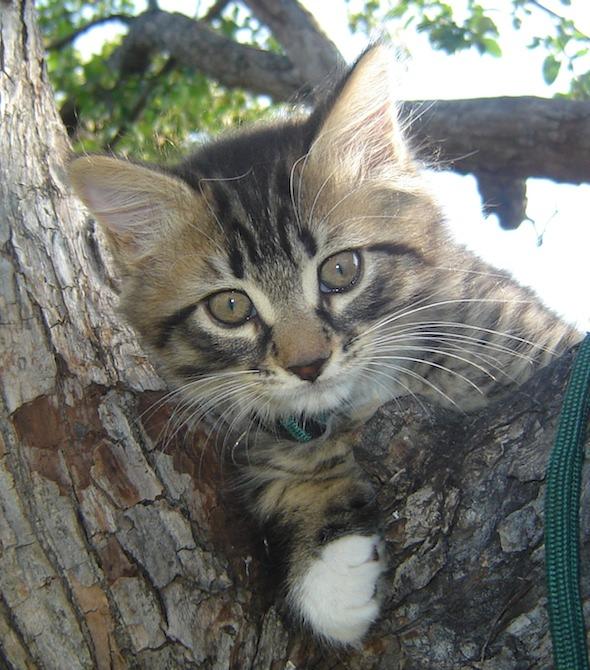 Lucky [5] kitten