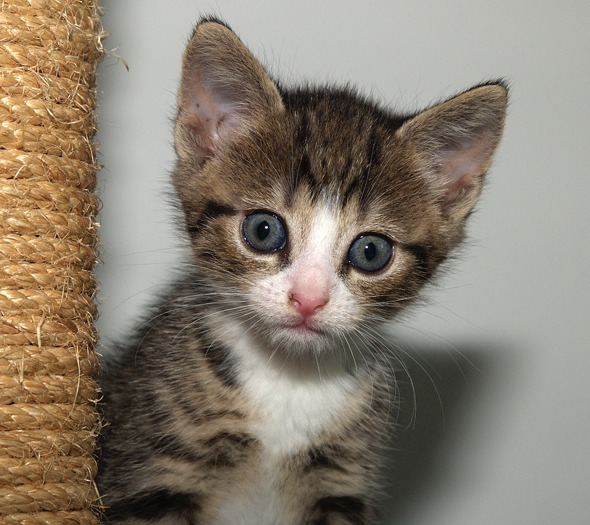 Poeka  kitten