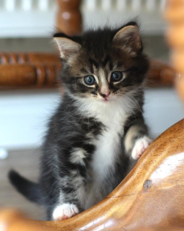 Frank  kitten