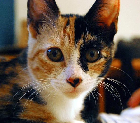 Daga [5]  kitten