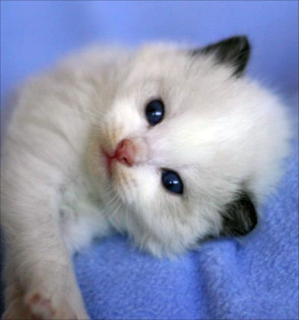 Jack [5]  kitten