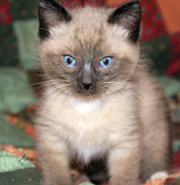 Omashu [4]  kitten