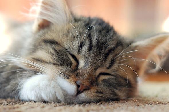 Leo [4] kitten