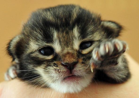 India's Kittens: Oracle [4] kitten