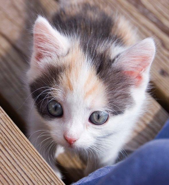 Ingela [5]  kitten
