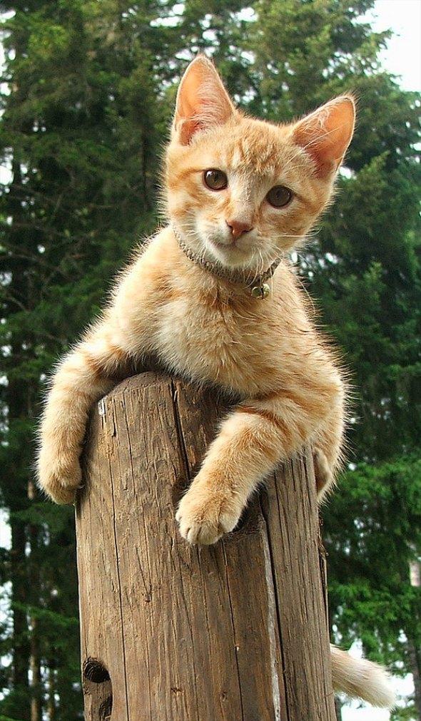 Mister [4] kitten