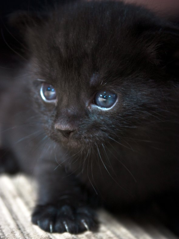 Necco [4] kitten